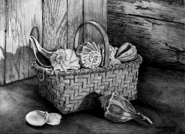 Basket of shells pencil drawing by Nick Santoleri
