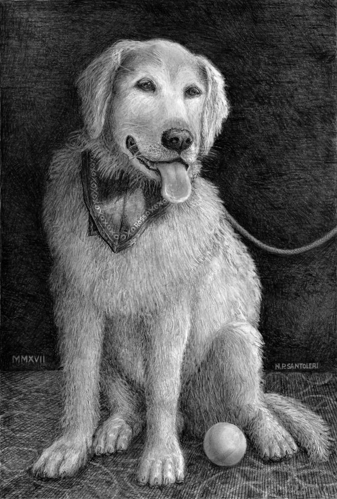 Old Dog Ross by Nicholas Santoleri